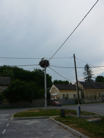 In the middle of some of the villages are huge nests of Stork birds. The birds are protected and their nests are not disturbed, even thought they are on the top of telephone poles.